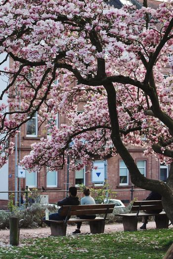 Resist Deutschland_greatshots Travel Destinations NewEyeEmPhotographer Tree Flower Cherry Blossom Love Lovecansavetheworld Loveistheanswer Resist Long Goodbye