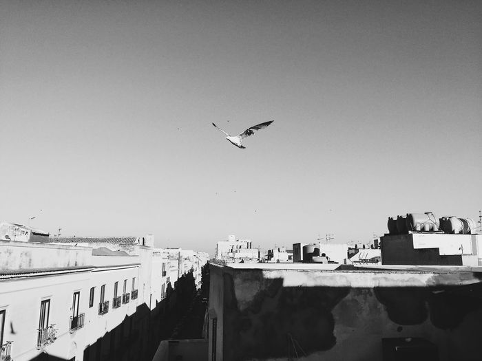 Seagulls flying in city against clear sky