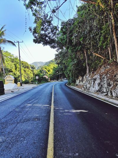 carreteras Tree