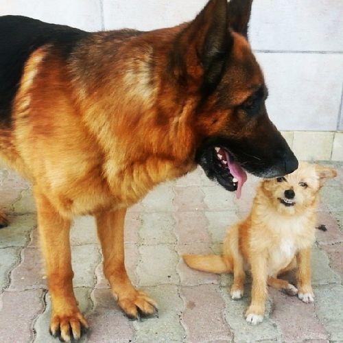Dogs Instapuppies Smile Happy love bestoftheday tagsforlikes