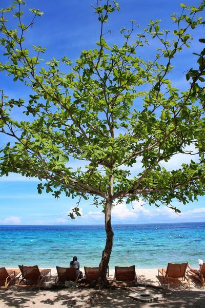 Beach Sea Tree Horizon Over Water Sky Blue Nature Scenics Sand Vacations Water Summer Day Outdoors Landscape Travel Destinations Beauty In Nature