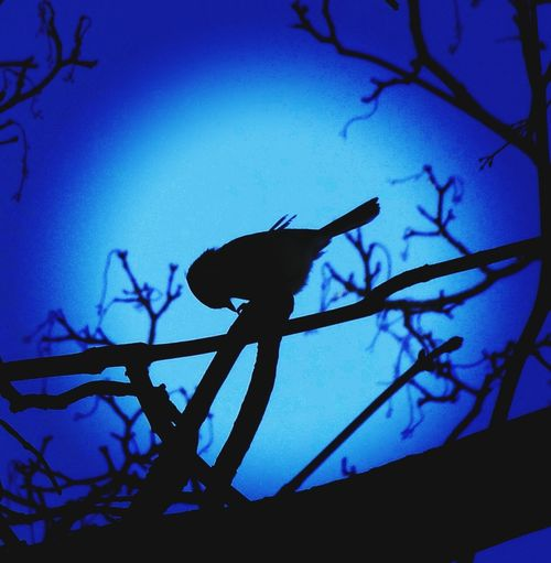 Bird Filter Blue Sky Light And Shadow Naturelovers Springtime Nature WoodLand colour of life Tree Branch Perching Silhouette Sky Animal Themes