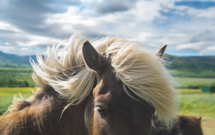 Animal Animal Themes Brown Horse Close Up Close-up Clouds And Sky Domestic Animals Eyes Hair Horse Horse Hair Horse Photography  Horse Portrait Horse Running Mammal One Animal