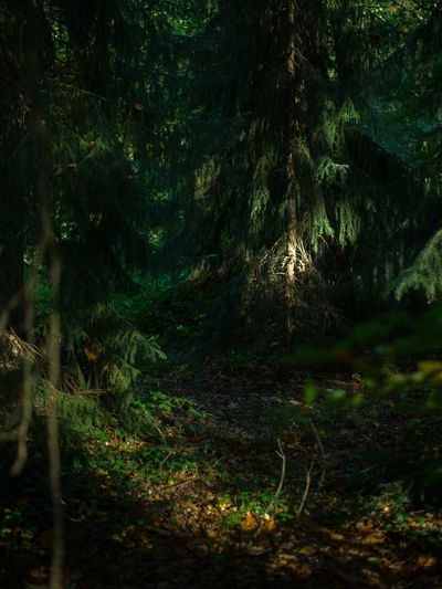Forest Netherlands Forest WoodLand Tree Nature Scenics Beauty In Nature Tranquility Tree Trunk Landscape No People Wilderness Nature Nature_collection Nature Photography Landscape_Collection Landscape_photography Outdoors Green Green Color Deep EyeEm Best Shots EyeEm Gallery Full Frame Eye4photography