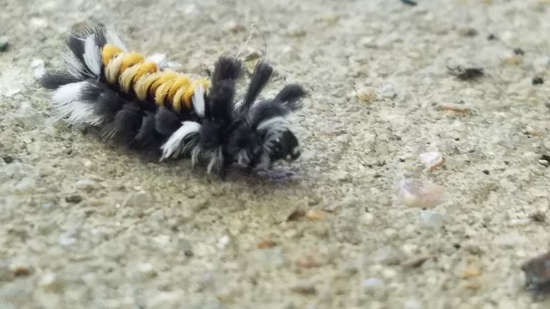 Crawling No People Outdoors Nature Beauty In Nature Taking Photos Atchison Kansas Nature Insect Catapiller Close-up