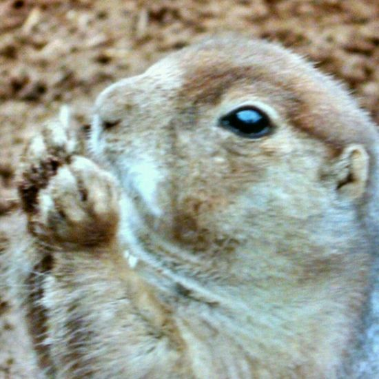 Yummy.... Prairiedog Nature_collection A Walk In The Park Landscape_Collection