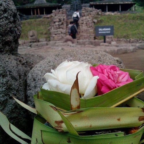 Mawar Merah Putih Sesajen di candi cetho karanganyar Indonesia OPPOnesia hindu punya