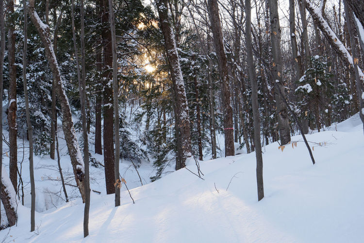 Trees on snow covered field during winter forest
