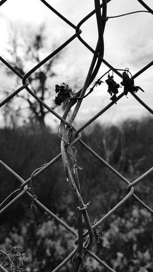 Metal Chainlink