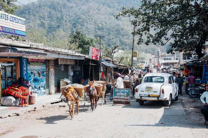Cows on road by street in city
