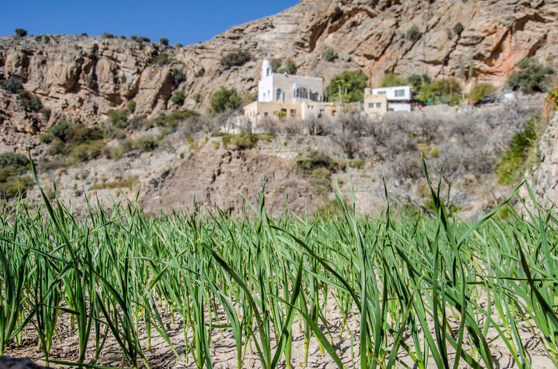Oman Architecture Arid Climate Beauty In Nature Building Building Exterior Built Structure Day Environment Grass Growth History Land Landscape Mountain Nature No People Outdoors Plant Scenics - Nature The Past Travel Destinations Tree
