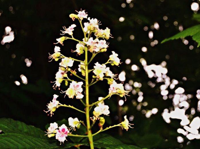 Beginnerphotographer Photoshopbeginner NikonD3100 Flowers Nature