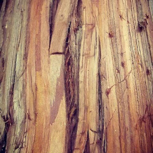 Wmm_brown Bark Trees Rsa_trees Pocket_trees