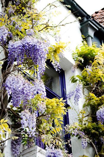 Purple flowering plants by building