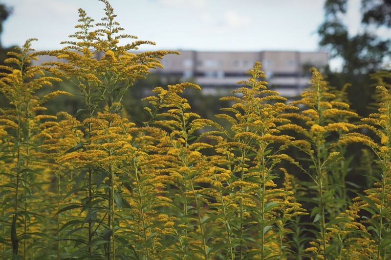 Scenic View Of Plants Against Cloudy Sky