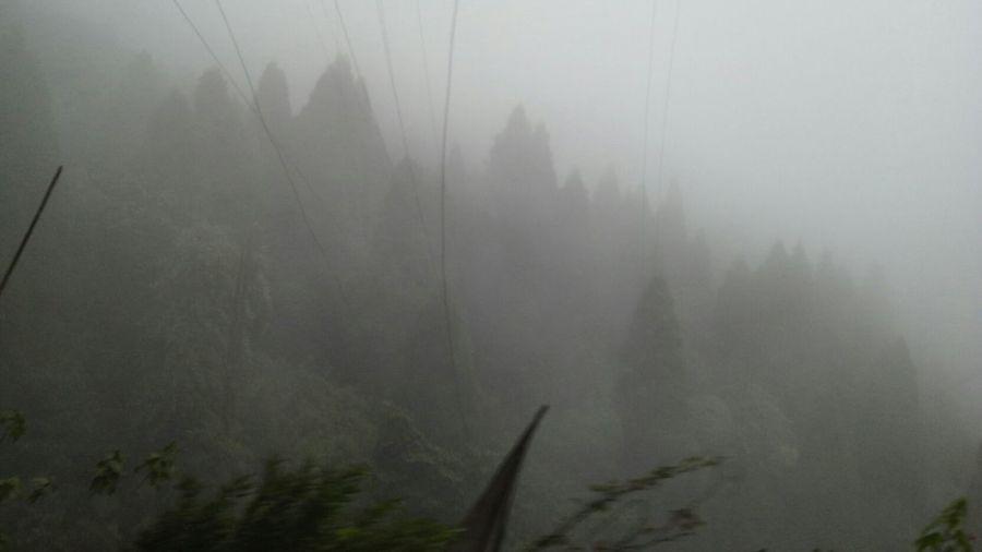 fog on land .....darjeeling First Eyeem Photo