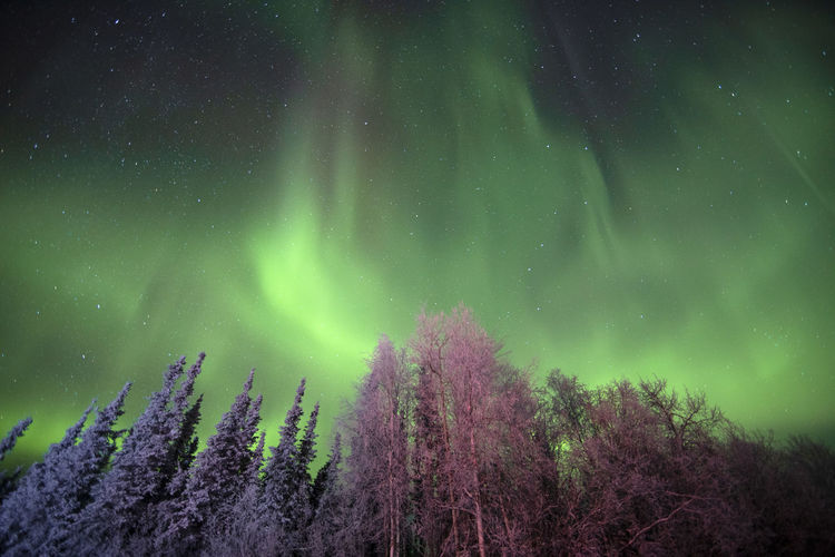 Low angle view of aurora polaris over trees at night