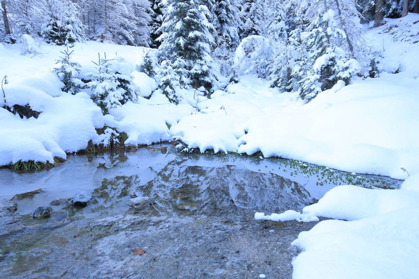 Christmas EyeEm Nature Lover Heile Welt Peace Pond Pristine Prättigau Pure Reflection The Week On EyeEm Tranquility Trees Winter Biophilia Cold Temperature Eye4photography  Forest Frozen Mountain Stream Reflections In The Water Silence Snow Stream Switzerland Water
