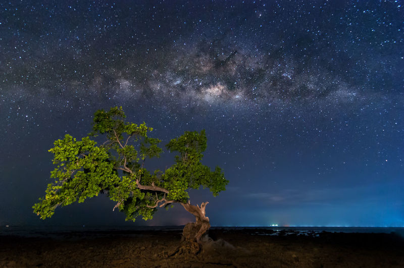 Nature background-Milky Way Star - Space Sky Astronomy Night Scenics - Nature Tree Galaxy Space Beauty In Nature Plant Tranquility Nature Tranquil Scene Land Milky Way Star No People Field Environment Landscape Outdoors
