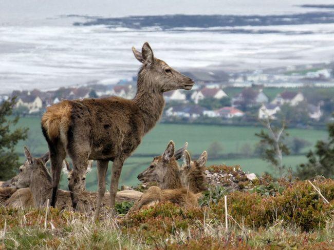 Animal Wildlife Outdoors Animal Nature No People Deer Deersighting Red Deer Deer Park Deers Dunster