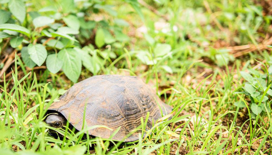 Turtle in a field