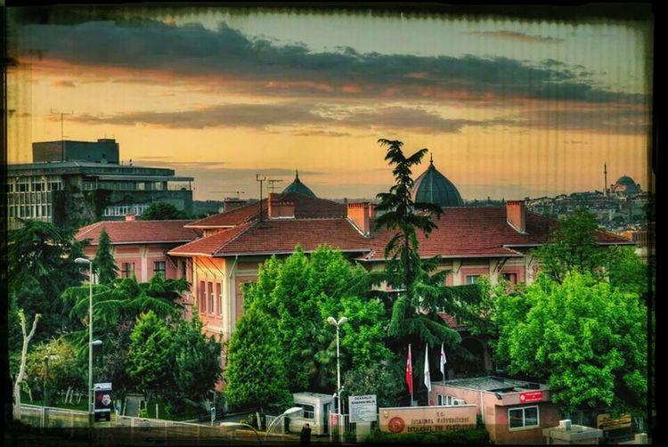 ıstanbul University Medicine Faculty_of_medicine İstanbul Tıp Fakültesi