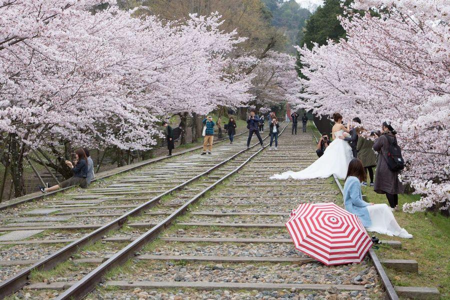 桜 蹴上 蹴上インクライン