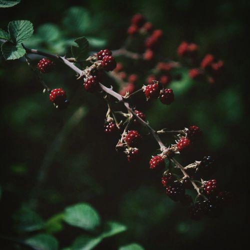 Bogurtlen Plants Food
