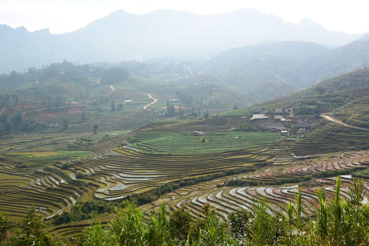 Ricefields in Sapa valley. Vietnam Agriculture ASIA Field Fog Green Landscape Mountain Nature No People Outdoors Rice Rice - Cereal Plant Rice Field Rice Paddy Ricefield Sapa Sapa, Vietnam Terraced Field Travel Vietnam Vietnamese