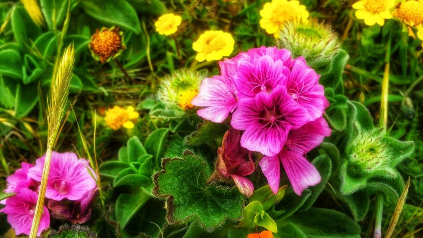 Wildflower plethora Pink Magneta Zen Background Yellow Green Meditation Moment Timeless Copy Space Wildflowers Shimmering Pattern Foreground Focus Passion Countryside Flower Head Flower Petunia Petal Purple Close-up Blooming Plant In Bloom Plant Life Stamen Botany Pistil Passion Flower