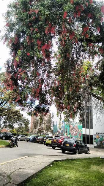 Parqueadero Arboles En Flor Arboles En Primavera Arbol. Arbolesycolores Arboles Nature Arboles , Naturaleza Arboles Universidad Nacional De Colombia UniversidadNacionaldeColombia University University Campus Universidad Corferias Calle 26 Bogota