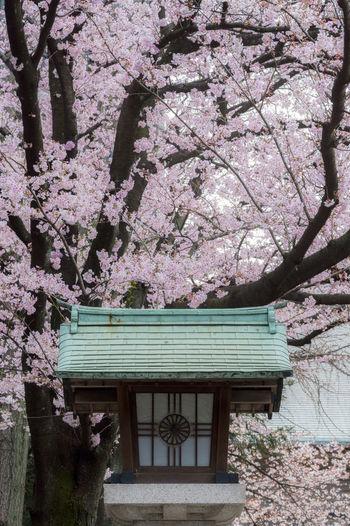 At Hie Shrine.