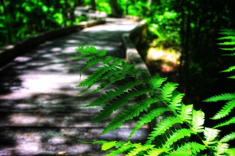 Green Color Plant Leaf Growth Plant Part Nature Tree Selective Focus Close-up Tranquility Sunlight Beauty In Nature Outdoors Land Forest Focus On Foreground Day Fern Freshness No People