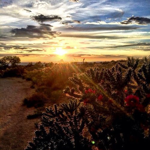 EyeEm Best Shots EyeEm Best Shots - Sunsets + Sunrise Cactus Flower I Love Cactus with Guy Robson .... Amazing Place