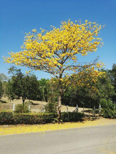 bienvenida la primavera Tree Sky