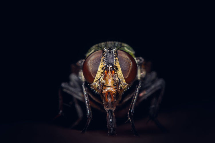 Animal Themes One Animal Animal Animal Wildlife Close-up Studio Shot Black Background Invertebrate Animals In The Wild Insect Arthropod Animal Body Part Eye Copy Space No People Arachnid Indoors  Front View Animal Eye Spider
