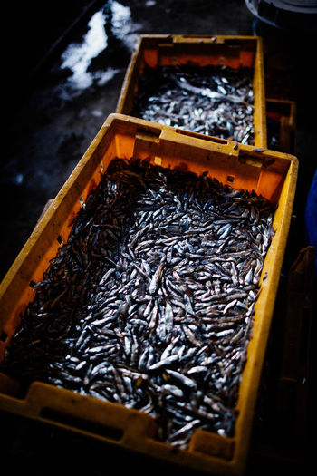 Container No People High Angle View Food And Drink Food Freshness Wood - Material Large Group Of Objects Box Abundance Indoors  Selective Focus Wellbeing Healthy Eating Day Focus On Foreground Box - Container Still Life Nature Close-up Tray Fish Factory Dried
