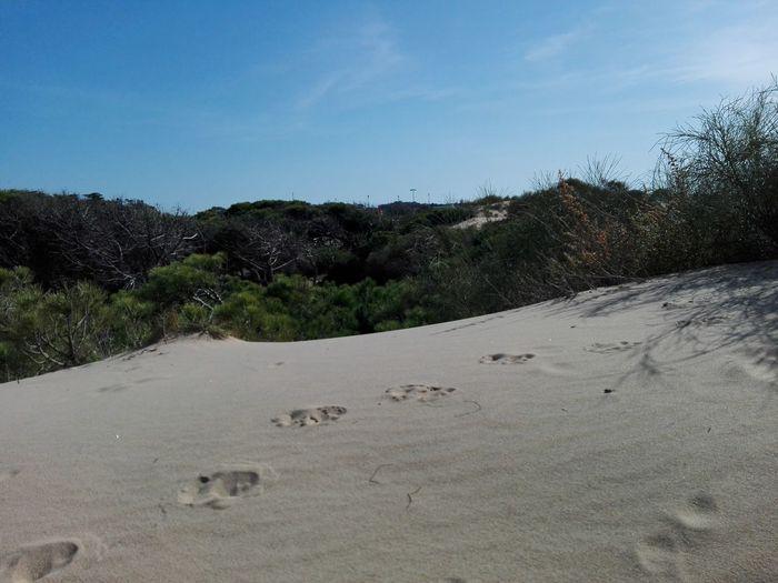 Sand Dune Huellas Rastro Pisadas Tree