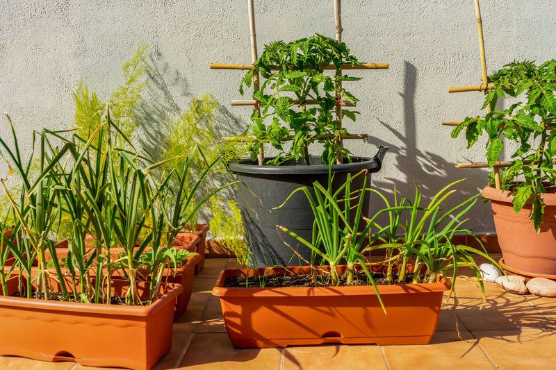 Potted plants against wall in yard