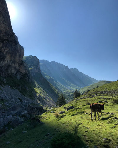 Horses in a valley