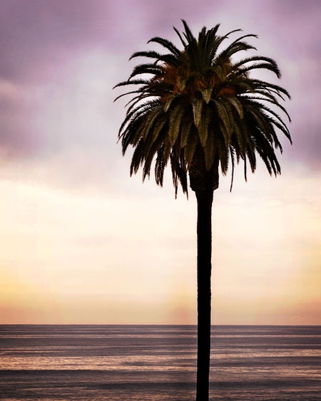 Scenic view of palm tree at beach
