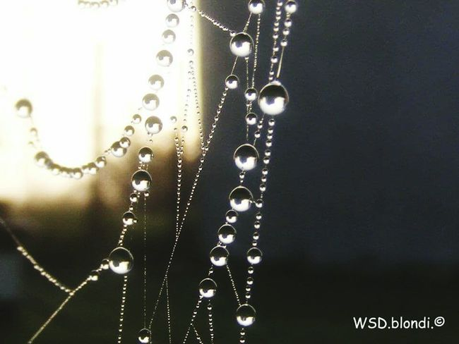 After The Storm Rain Drops Spiderweb Water Close Up Rain