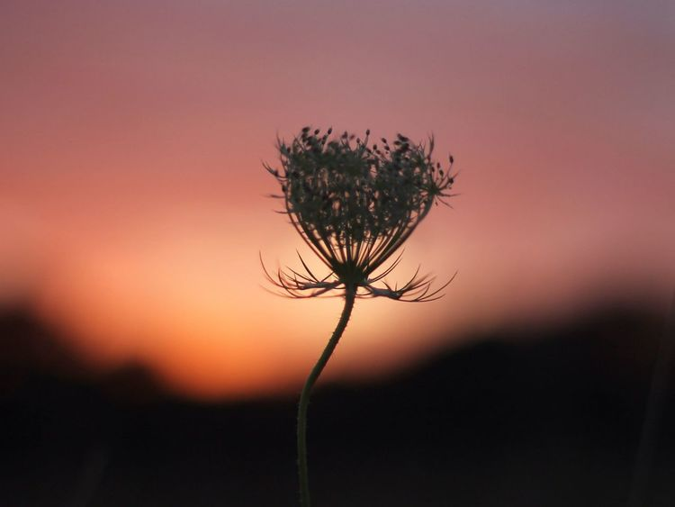 Simplicity.... Streamzoofamily Sunrise N Sunsets Worldwide  Peace And Tranquility Sunset Silhouettes
