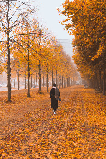 Berlin Herbst Autumn Autumn Collection Change Day Full Length Leaf Leisure Activity Lifestyles Motion Nature One Person Orange Color Outdoors Plant Plant Part Real People Rear View The Way Forward Tree Treelined Walking
