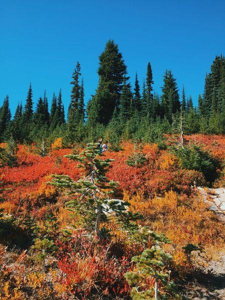 Fall Beauty Autumn Trees