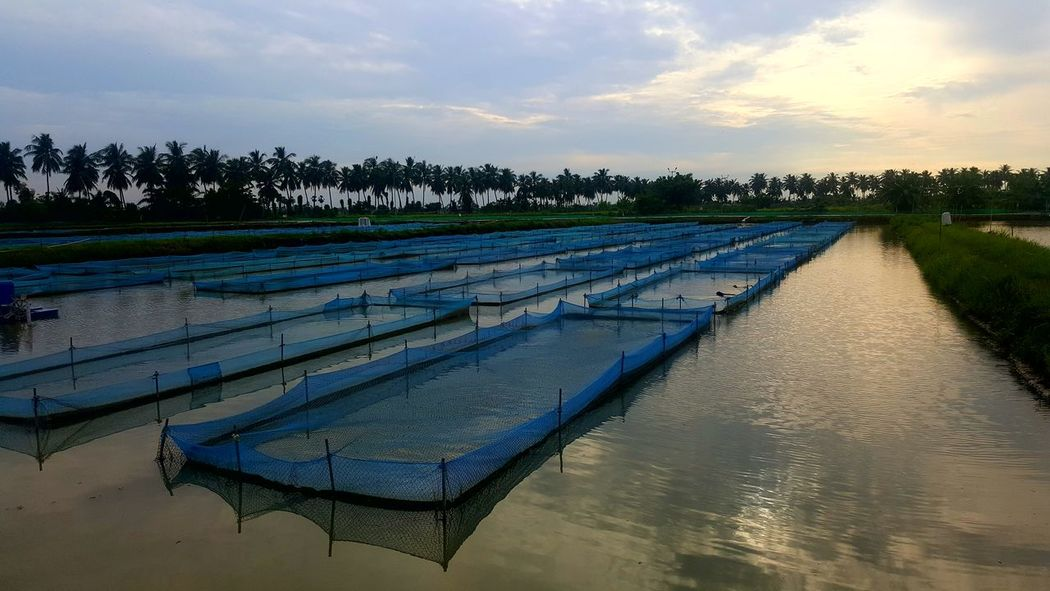 Agriculture Aquaculture Water Cloud - Sky No People Landscape Outdoors Rural Scene Tree SkyScenics Nature Day Beauty In Nature Irrigation Equipment Sunset Pond Lost In The Landscape