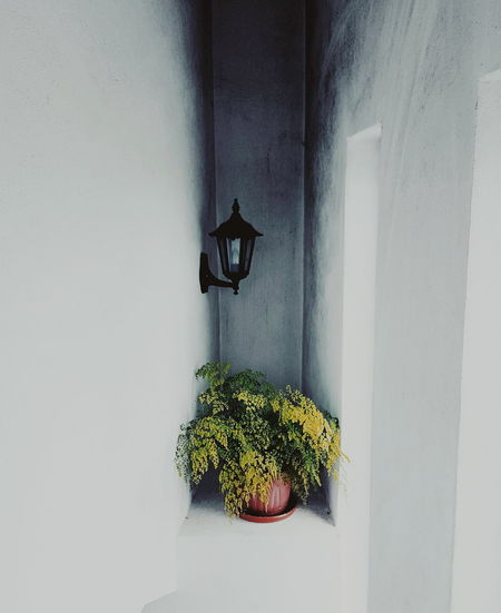 Potted plant and electric lamp in niche