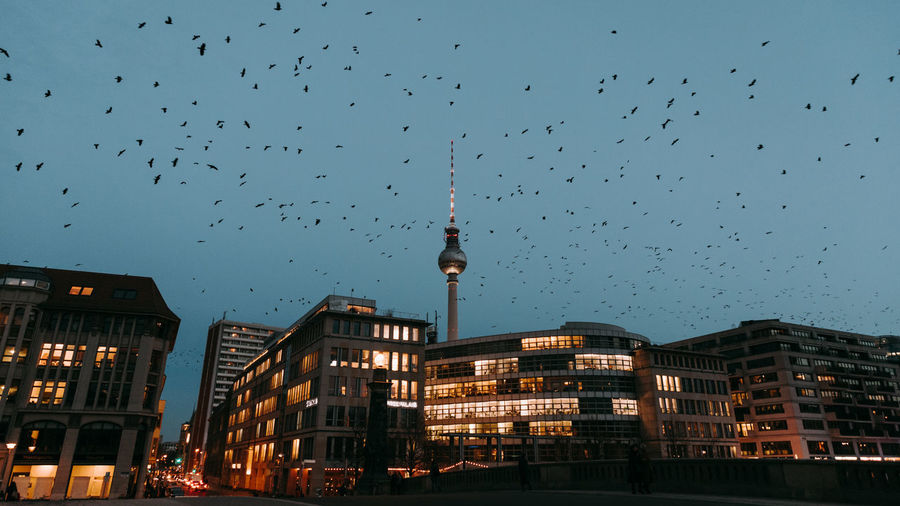 Birds flying over buildings in city