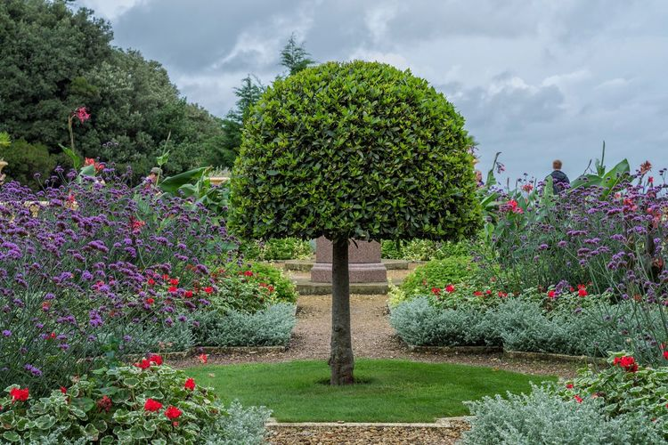 A very green tree at Osborne House. Cloud - Sky Tree Growth Flower Green Color Plant Nature Sky Outdoors No People Day Beauty In Nature