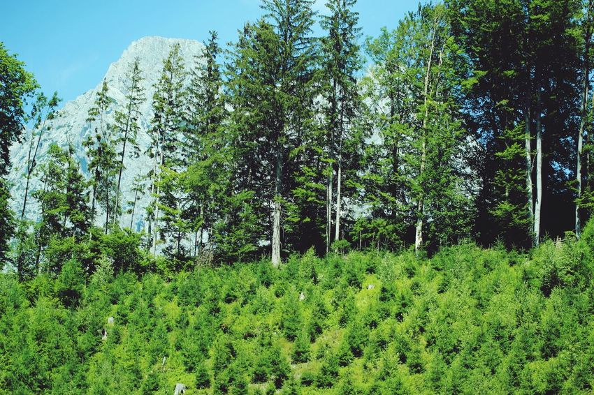 Mountain View Tree Lush Foliage Park - Man Made Space Sky Grass Green Color Plant Plant Life Growing Green Countryside